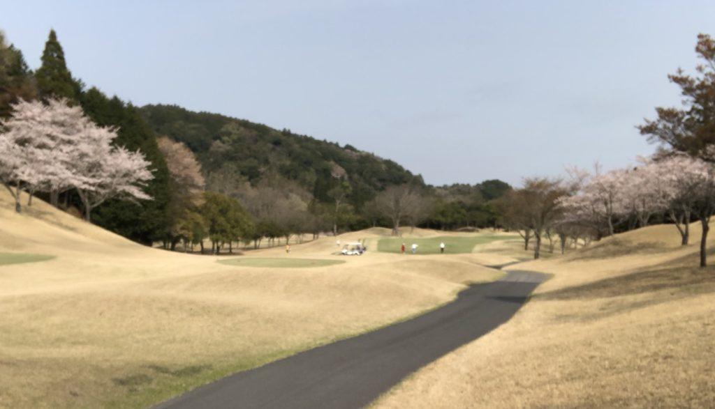 ゴルフ場の桜の写真